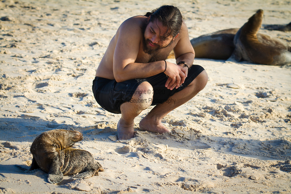 A newborn sea lion pup approaches a young man on a sandy beach on the island of San Cristobal in the Galapgos National Park, in Ecuador, South America