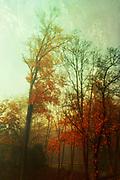 Tree silhoueetes with fall foliage at sunrise
