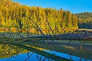 Fallen treeon shoreline  at sunset, Port Renfrew. Vancouver Island, British Columbia, Canada