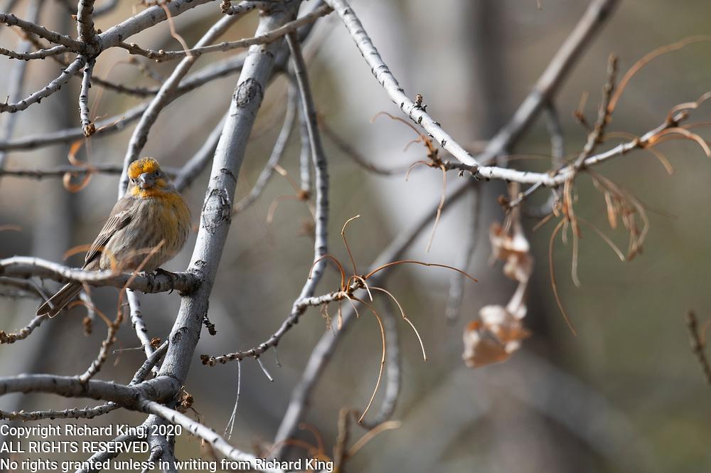 Birding Images from Madera Canyon, Tucson, AZ
