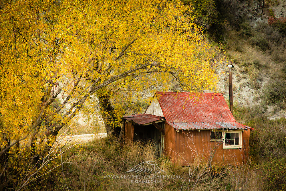In autumn, the gold is found above the gold miner's shack!