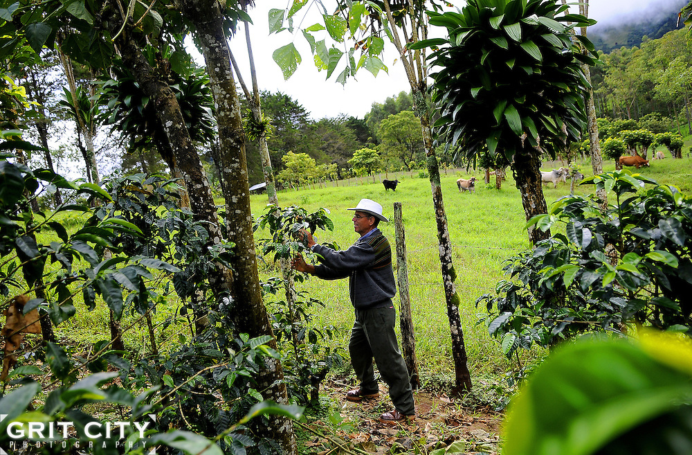 Costa Rica is home to some of the world's best coffee.