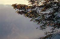 The early morning sun catches the Autumn leaves of the mountain trees in central Taiwan at Alishan national park.