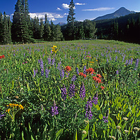 Lupine and Indian Paintbrush flowers fill a meadow near Big Sky, Montana.  Lone Mountain is in the background.