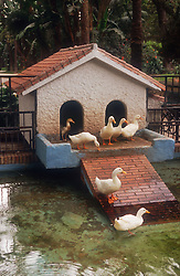 Paseo del Parque; Malaga; with ducks swimming in pond and standing outside bird house,