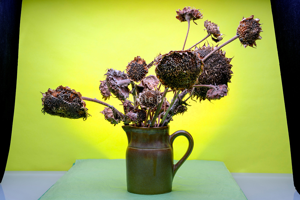 withered sunflower bouquet still life