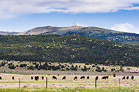 The north side of 8,720 ft. Sierra Grande, a large shield volcano on the plains of northeastern New Mexico.