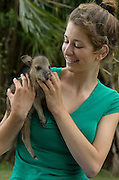 Collared peccary baby (Pecari tajacu)<br /> Belize,<br /> Central America<br /> & Lexxi Monassa<br /> Captive