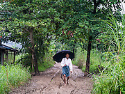 14 JUNE 2013 -  SAMALAUK, AYEYARWADY, MYANMAR: A man walks up a muddy road in the rain to Highway 5 in Samalauk, Ayeyarwady, in the Irrawaddy delta region of Myanmar. This region of Myanmar was devastated by cyclone Nargis in 2008 but daily life has resumed and it is now a leading rice producing region.   PHOTO BY JACK KURTZ