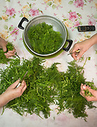 Cleaning up the wild herbs gathered in the nearby fields. Diner at the Moschonas family. In and around the village of Meronas.