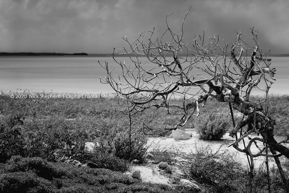 A dead tree by a clear water lagoon in the Caribbean.