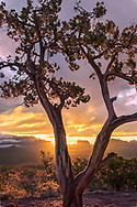 Sedona, juniper tree, Courthouse Rock, sunrise, storm, Arizona