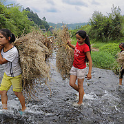 Girls fetch weed used to roast fresh fish caught in rice paddies.