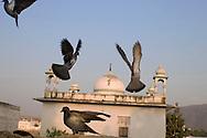 Birds and a Shiva-temple, Pushkar, Rajasthan, India