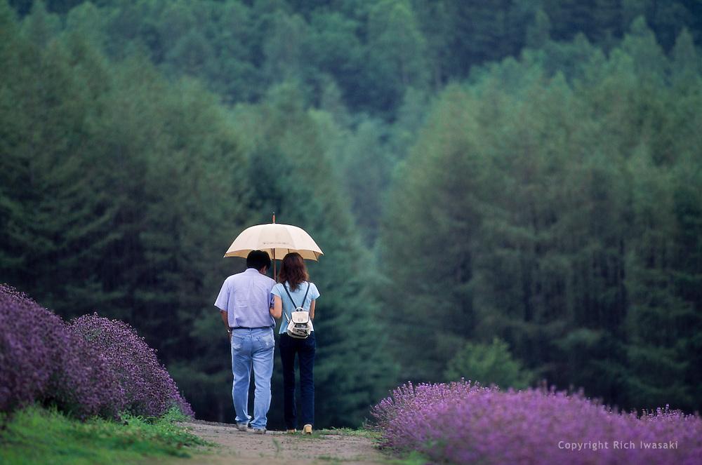 Visitors with umbrella walk in lavender field at Sakano Sato farm, Naka Furano, Hokkaido Prefecture, Japan