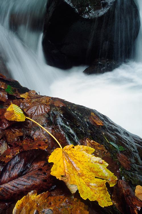 Autumn design, Caucasus Mountains, Lagodekhi National Park, The Country of Georgia