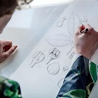 Nederland, Leiden, 12 april 2017.<br /> Esmée Winkel uit Leiden is op dit moment de enige beroeps botanisch wetenschappelijk illustrator. In 2013 studeerde zij daarvoor af in Maastricht. Ze werkt nu bij Naturalis in Leiden. <br /> Op de foto: Esmee aan het werk in het Herbarium van Naturalis.<br /> <br /> <br /> Foto: Jean-Pierre Jans