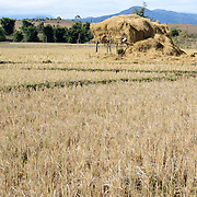A platform holds the storks of threshed rice in a field on the way to Site 3 of the Plain of Jars in Laos.