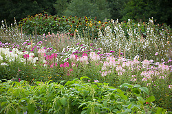 General view of the cut flower borders at Juliet Glaves' garden