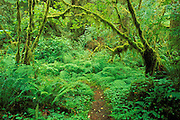 Trail in the Queets Rain Forest, Olympic National Park, Washington USA