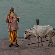 2016 10 14 Rishikesh Uttarakhand Indien<br /> Helig man med helig ko vid Ganges<br /> <br /> ----<br /> FOTO : JOACHIM NYWALL KOD 0708840825_1<br /> COPYRIGHT JOACHIM NYWALL<br /> <br /> ***BETALBILD***<br /> Redovisas till <br /> NYWALL MEDIA AB<br /> Strandgatan 30<br /> 461 31 Trollhättan<br /> Prislista enl BLF , om inget annat avtalas.