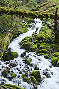 Wahkeena Creek flows trhough green mossy rocks in Columbia River Gorge National Scenic Area, Oregon, USA.