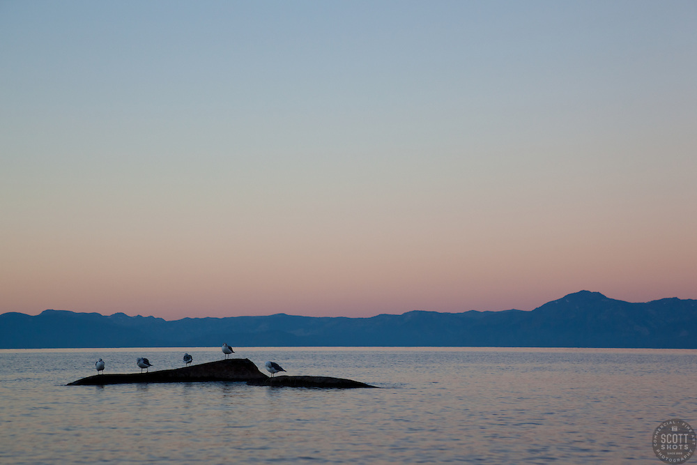 """""""Seagulls at Sunrise, Lake Tahoe 2"""" - These seagulls were photographed from a kayak at sunrise on Lake Tahoe, near Speed Boat Beach."""