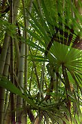 Green leaves and bamboo.