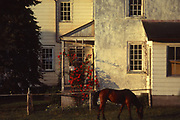 Amish house, horse, roses and note on porch for Sadie, Lancaster Co., PA