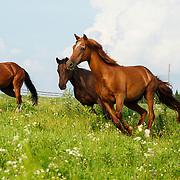 20110731 Horse Herds