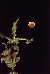 © Licensed to London News Pictures.<br /> Aberystwyth, UK. Monday 21/01/2019. At just after 5am a crystal clear and bitterly cold morning, the Blood Red Wolf Moon, eclipsed by the earth and turning a deep rich red, sets over the war memorial statue in Aberystwyth Wales UK. The full moon is passing through  the shadow of the earth and  appears red because it is illuminated by the weak diffused sunlight reaching it through the earth's atmosphere. Photo credit: Keith Morris/LNP