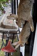 Dead rabbits hang outside a butchers shop in Ludlow, on 11th September 2018, in Ludlow, Shropshire, England UK.