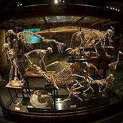 Darwin Anniversary