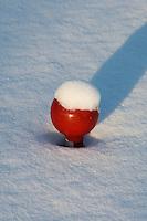 HILVERSUM - Besneeuwde tee. De baan van de Hilversumse Golfclub besneeuwd. COPYRIGHT KOEN SUYK
