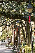 Christmas decorations on gas lamps in Forsyth Park Savannah, GA.