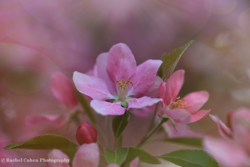 """""""Spring Fling""""<br /> <br /> Feel the beauty and magic of all that spring has to offer in this lovely floral image!"""