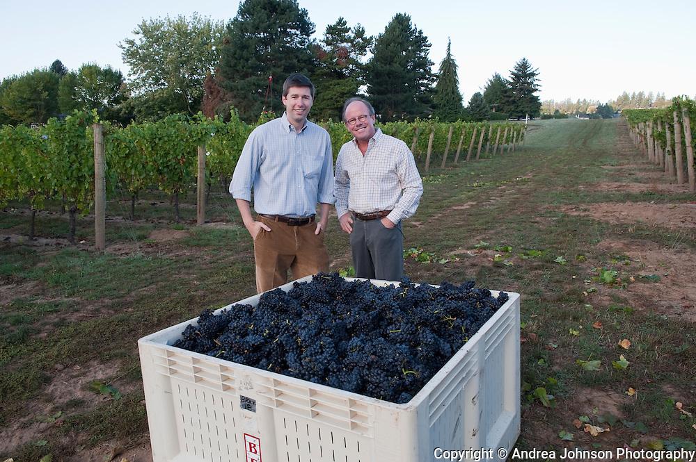 Four Grace's Estate vineyard, Dundee Hills, Willamette Valley, Oregon