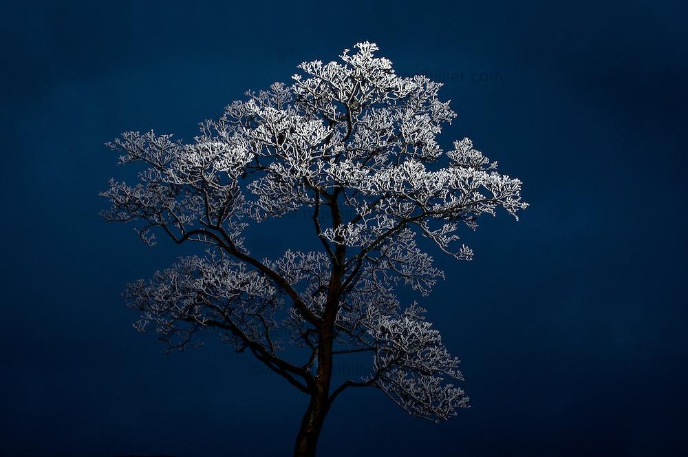 Frosty Tree, widdop near hebden bridge, west yorkshire.