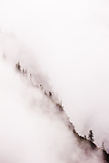 A line of trees shows through the dense fog in Yosemite National Park in California.