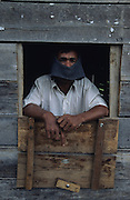 Batak agricultural worker wearing head protection, takes a break from packing rice..Batak Indigenous Christian people living on Samosir Island and nearby Lake Toba in Indonesia. There are some 6 million Christian Batak in Indonesia, the world's largest Muslim country of 237 million people, which has more Muslims than any other in the world. Though it has a long history of religious tolerance, a small extremist fringe of Muslims have been more vocal and violent towards Christians in recent years. ..Batak religion is found among the Batak societies around Lake Toba in north Sumatra. It is ethnically diverse, syncretic, liable to change, and linked with village organisations and the monotheistic Indonesian culture. Toba Batak houses are boat-shaped with intricately carved gables and upsweeping roof ridges, and Karo Batak houses rise up in tiers. Both are built on piles and are derived from an ancient Dong-Son model. The gable ends of traditional houses, Rumah Bolon or Jabu, are richly decorated with the cosmic serpent Naga Padoha carved in wood or in mosaic, lizards, double spirals, female breasts, and the head of the singa, a monster with protruding eyes that is part human, part water buffalo, and part crocodile or lizard. The layout of the village symbolises the Batak cosmos. They cultivate irrigated rice and vegetables. Irrigated rice cultivation can support a large population, and the Toba and the Karo live in densely clustered villages, which are limited to around ten homes to save farming land. The kinship system is based on marriage alliances linking lineages of patrilineal clans called marga. In the 1820's Islam came to the southern Angkola and Mandailing homelands, and in the 1850's and 1860's Christianity arrived in the Angkola and Toba region with Dutch missionaries and the German Rheinische Mission Gesellschaft. The first German missionary caused the Dutch to stop Batak communal sacrificial rituals and music, which was a major blow to the traditional religi