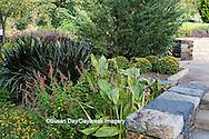 65821-00112 Bengal Tiger Canna (Canna 'pretoria'), Princess Napiergrass (Pennisetum purpureum 'Princess'), Linear Zinnia (Zinnia angustifolia 'Star Gold'), Salvia (Salvia 'Lady in Red') at Terrace Garden, Sarah P. Duke Gardens, Durham, NC
