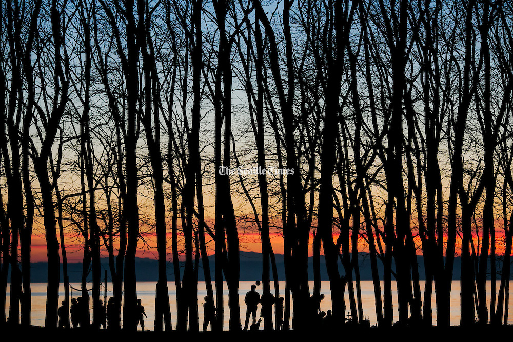 The warm colors of winter dusk could be seen through the silhouette of trees at the Golden Gardens Park in the Ballard neighborhood of Seattle.<br /> <br /> Marcus Yam / The Seattle Times