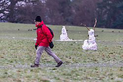 © Licensed to London News Pictures. 26/01/2021. London, UK. A man walks past abandoned snowmen standing in the green grass in Richmond Park, South West London as temperatures are expect to rise in to double figures this week after heavy snowfalls hit the South East at the weekend. Photo credit: Alex Lentati/LNP
