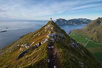 Female hiker on narrow ridge of Veggen mountain peak, Vestvågøy, Lofoten Islands, Norway