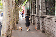 A Chinese woman walks her dogs in the old French Concession of Shanghai, China