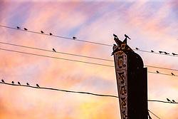 Birds on electrical wires in Deep Ellum, Dallas, Texas, USA.