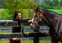 Thoroughbred mare, Winstar Farm, Versailles (Lexington), Kentucky USA.