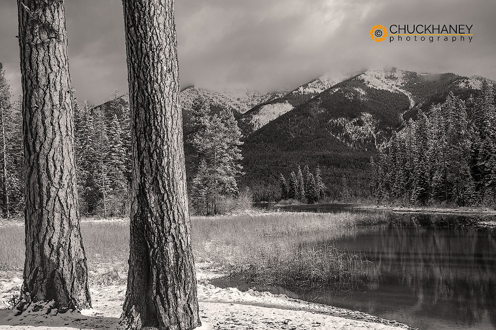 Ponderosa Pine Trees and Early winter snow along Holland Lake in the Flathead National Forest, Montana, USA