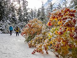 United States, Washington, Kittitas County, Peoh Point hike (winter)