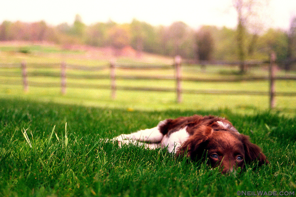 A small dog rests in the cool grass and reflects on the meaning of the world(?).